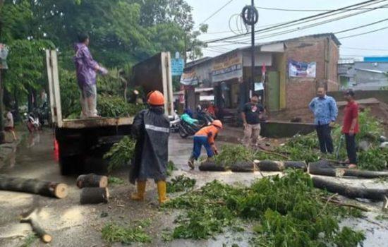 Camat Panakkukang Terjun ke Lapangan Arahkan Satgas Bersihkan Pohon Tumbang