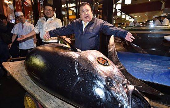Ikan Tuna Bluefin Ini Berhasil Dilelang Seharga Rp 4.4 Milliar