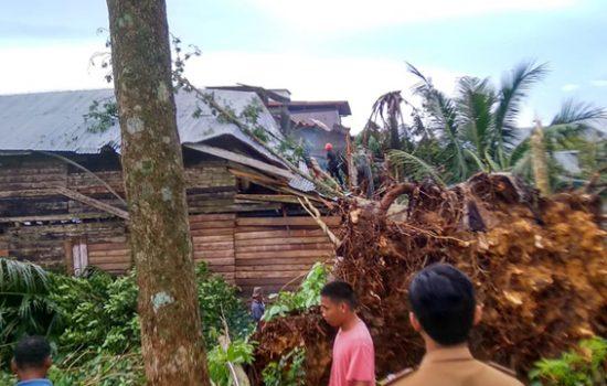 Tertimpa Pohon Tumbang, Dua Rumah Warga di Bone Rusak Parah