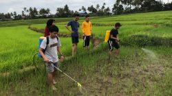 Mahasiswa Polbangtan Gowa Lakukan Herbisida