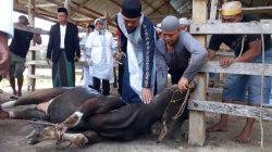 68 Hewan Kurban Polres Bone Diawasi Dinas Peternakan