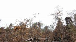 Pantau Kebakaran Hutan Riau, Panglima TNI Andalkan Drone