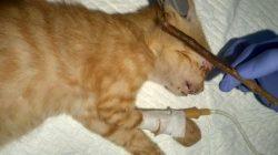 Teror Penganiayaan : Pria Ini Tega Tusuk 12 Ekor Mata Kucing