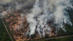 Karhutla Riau di Awal 2020, Hanguskan 1 Hektar Lahan Gambut