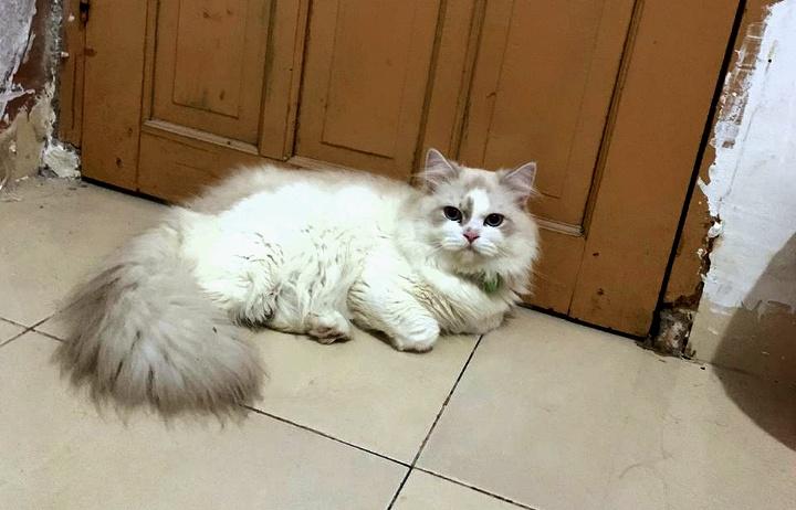 Kasihan Kucing Lucu Berkalung Hijau Hilang Ada Yang Tahu Bonepos Com Informasi Berita Terkini Sulsel