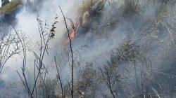 Kawasan Hutan dan Lahan Dusun Kembali Terbakar, Ini Titik Lokasinya