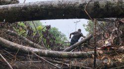 """Pandemi Corona, PLN """"Peras Keringat"""" Alirkan Listrik di 5 Dusun Sulselbar"""