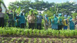 Aksi Bagi-bagi Sayur di Bone, Kadis Asman Terus Genjot Kelompok Wanita