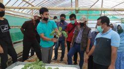 Kadis Asman Kawal Wagub Sulsel Tinjau Kehadiran Green House di Desa Mappesangka Bone
