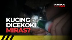 [CEK FAKTA] Soal Video Viral Anak Kucing Dicekoki Miras di Bone