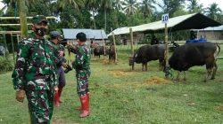 Kepala Staf TNI Angkatan Darat Jenderal TNI Andika Perkasa Sumbang 21 Ekor Sapi Qurban