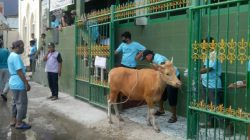 KH Qurais Shihab Khatib di Masjid Jabal Nur, Bagikan 450 Kg Daging