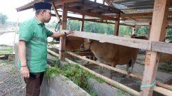 Konsep UPPO, Cara AAP Berdayakan Petani Bulukumba