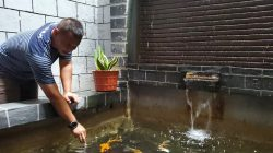Akhir Pekan Danyon 'Tindizzz', Tenangkan Hati di Kolam Ikan