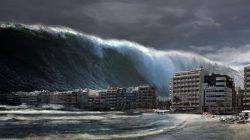 Binatang Ini Bisa Jadi Pertanda Kuat Tsunami dan Gempa