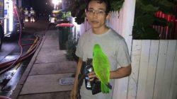 Burung Beo Berteriak Selamatkan Nyawa Anton dari Kobaran Api, Ini Cerita Selengkapnya