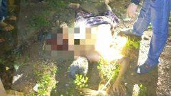 Tragedi Berdarah di Kajuara Bone, Satu Tewas Diparang, Lainnya Melarikan Diri