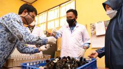 Kiat Bupati Bantaeng Pacu Produksi Ternak Ayam