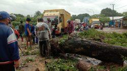 Sempat Macet, Pohon Tumbang di Gowa Tutup Sebagian Ruas Jalan Provinsi