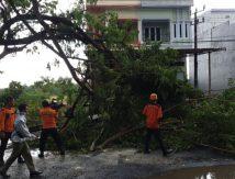 Breaking News Hujan Deras Disertai Angin Kencang Terjang Bone, Waspada Pohon Tumbang!