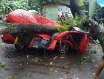Mobil Penyok Tertimpa Pohon di Takalar, Sopir Meninggal Dunia