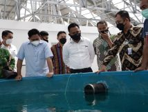 Bupati Bantaeng Belajar Rumput Laut di Ambon, Ditawari Garap Ikan Hias