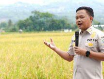 Pantas Dicontoh, Cerita Bupati Bantaeng Panen Melimpah tanpa Pupuk Subsidi