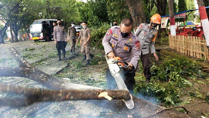 Berita Foto: Petugas Evakuasi Pohon Tumbang di Depan Kantor DPRD Bone