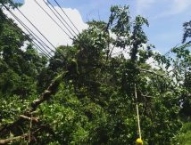 Diterjang Cuaca Ekstrem, Personel PLN Bertaruh Nyawa Pemulihan Gangguan