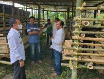 Kadis Asman Monitoring Familiy Farming Desa Tellangkere Tellu Limpoe, Begini Temuannya