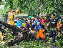 13 Titik di Gowa Terjadi Pohon Tumbang, Berikut Daftar Lokasinya