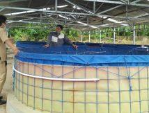 Program Budidaya Ikan Pemkab Sinjai Masuk Pesantren, Pembina: Semoga Dibantu Pemasaran