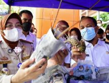Plt Gubernur Sulsel Ekspor Perikanan Rp97 Miliar, Ini Negara Sasarannya