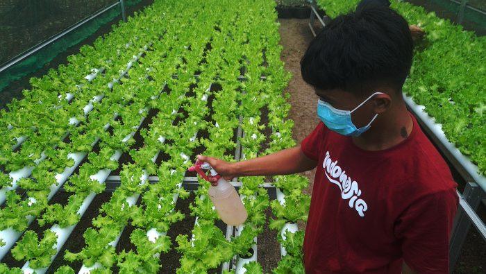FOTO: Meraup Untung Budi Daya Sayur Hidroponik ala Pemuda Takalar