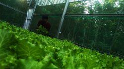 FOTO Meraup Untung Budi Daya Sayur Hidroponik ala Pemuda Takalar 1 (2)