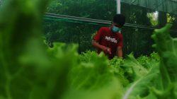 FOTO Meraup Untung Budi Daya Sayur Hidroponik ala Pemuda Takalar 1 (3)
