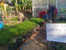 Pemuda di Gowa Keren! Bagi-bagi Sayur Gratis Selama PPKM