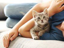 Wajib Tahu, Kenali Gejala Kucing yang Terkena COVID-19