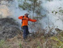 Kronologi Kebakaran Semak dan Lahan Terjadi di Taman Wisata Alam