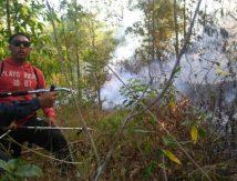 [Update] Begini Perkembangan Kondisi Kebakaran Lahan dan Semak